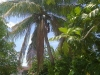 un Haïtien grimpe pour retirer les branches sèches